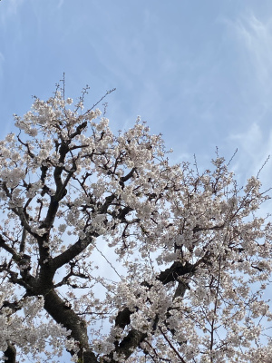 初めての鎌倉にて 展示のお知らせ_f0181011_11412656.jpeg
