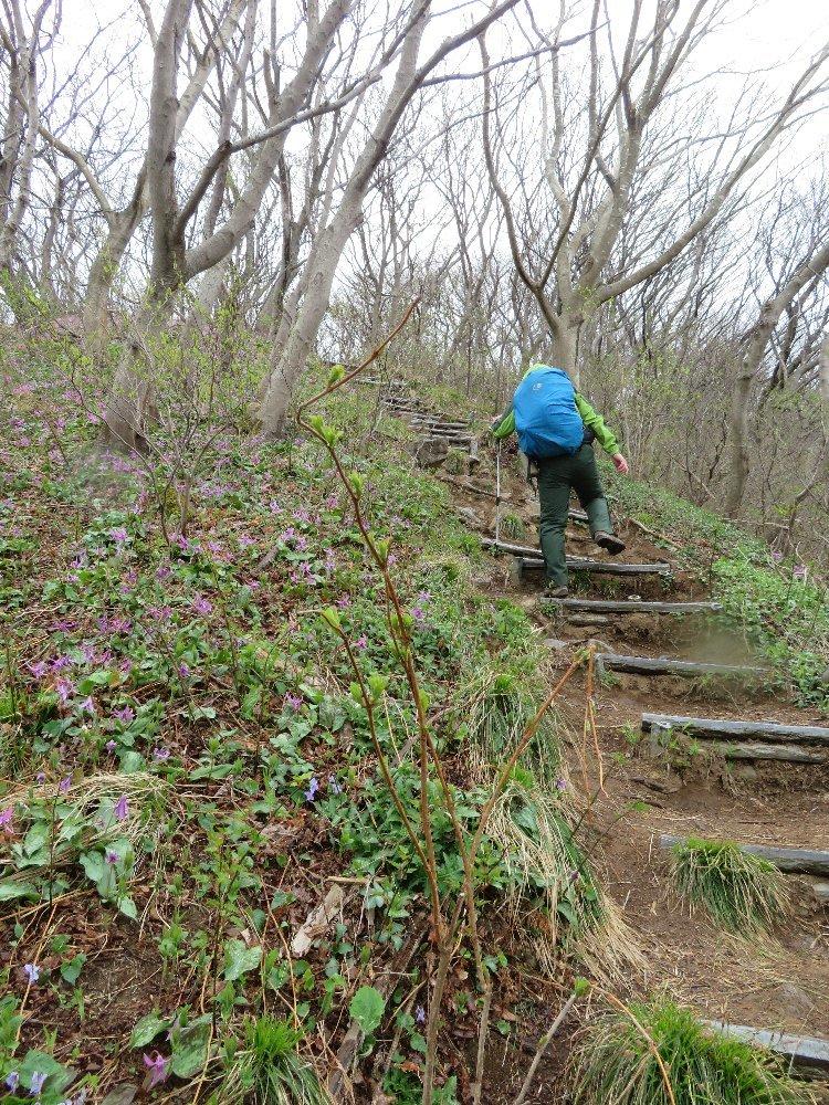 角田山の花はカタクリからイカリソウへ_a0309917_19240348.jpg