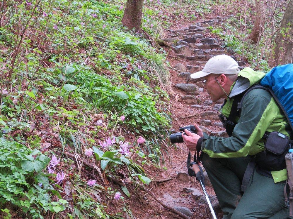 角田山の花はカタクリからイカリソウへ_a0309917_19334909.jpg