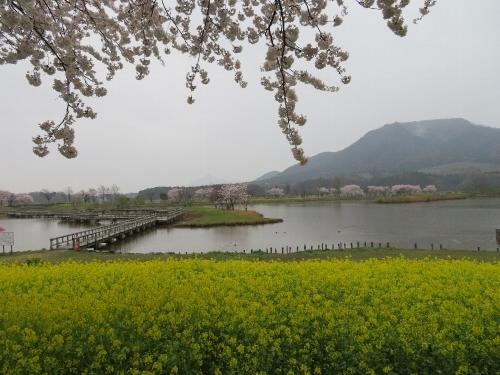 角田山の花はカタクリからイカリソウへ_a0309917_19370856.jpg