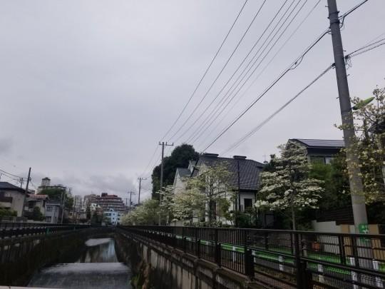 ♪ハッピーな街散策★成城界隈_d0162225_20475726.jpg