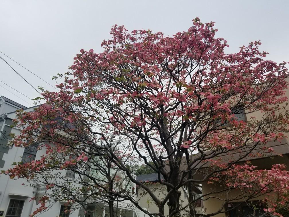 ♪ハッピーな街散策★成城界隈_d0162225_20480011.jpg