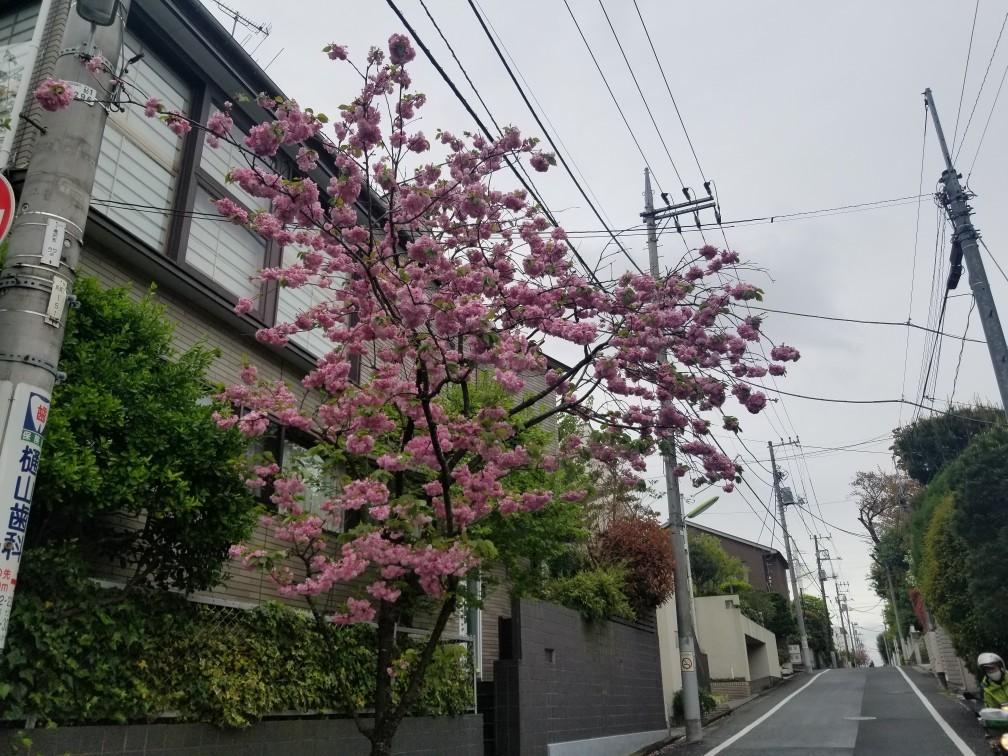 ♪ハッピーな街散策★成城界隈_d0162225_20482704.jpg