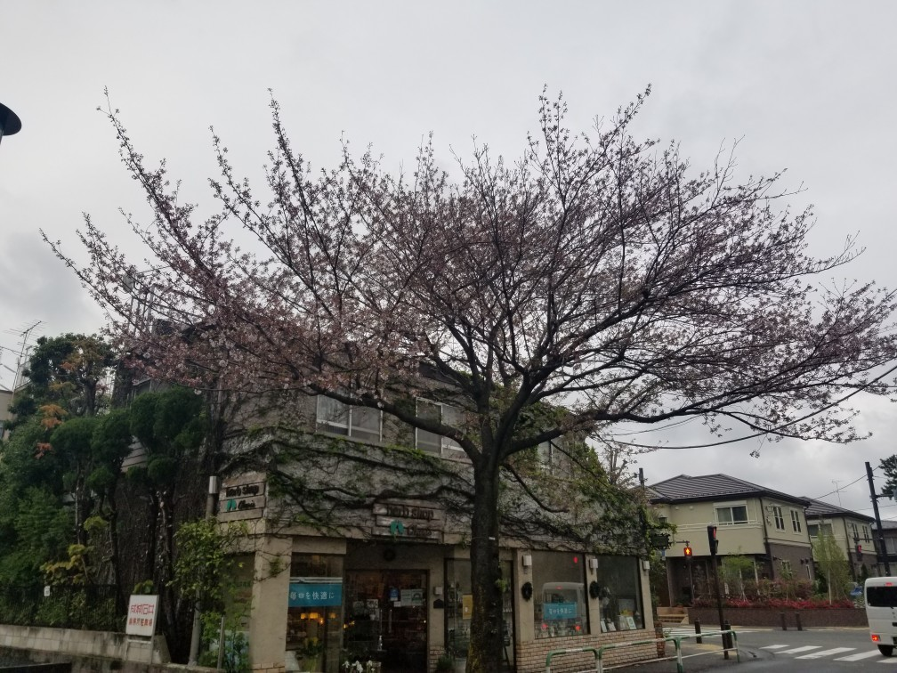 ♪ハッピーな街散策★成城界隈_d0162225_20483728.jpg
