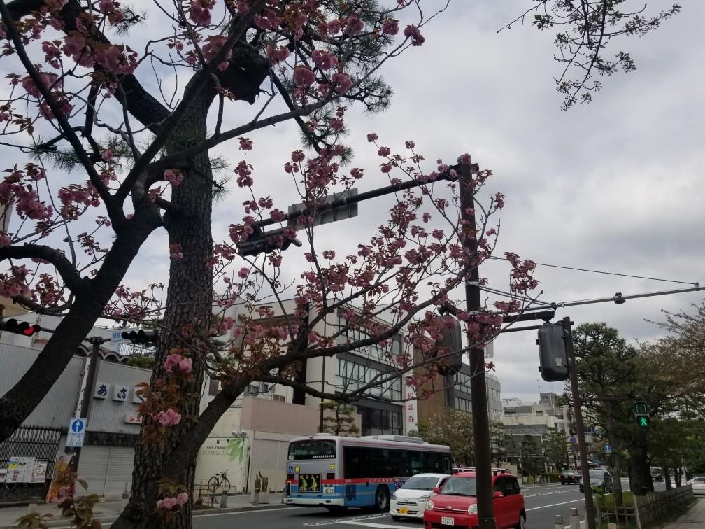 ♪2021年春★お花見模様(鎌倉~逗子~葉山)_d0162225_21211750.jpg
