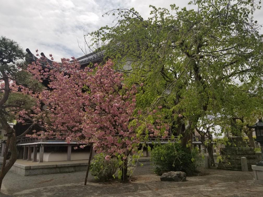 ♪2021年春★お花見模様(鎌倉~逗子~葉山)_d0162225_21212011.jpg