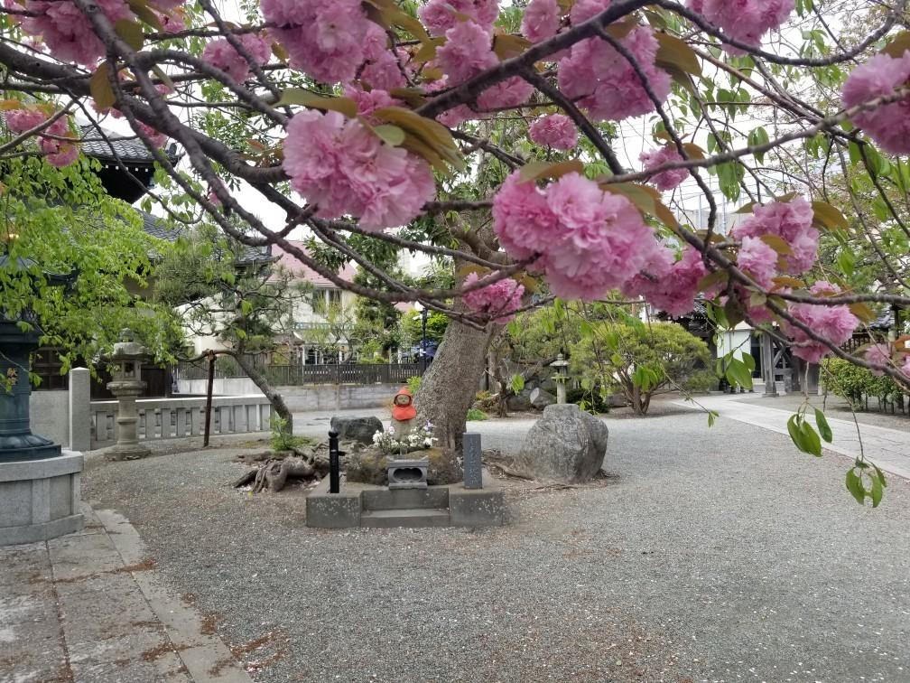 ♪2021年春★お花見模様(鎌倉~逗子~葉山)_d0162225_21220332.jpg