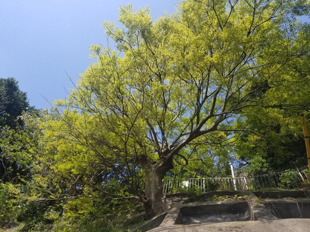 ♪2021年春★お花見模様(鎌倉~逗子~葉山)_d0162225_21223348.jpg