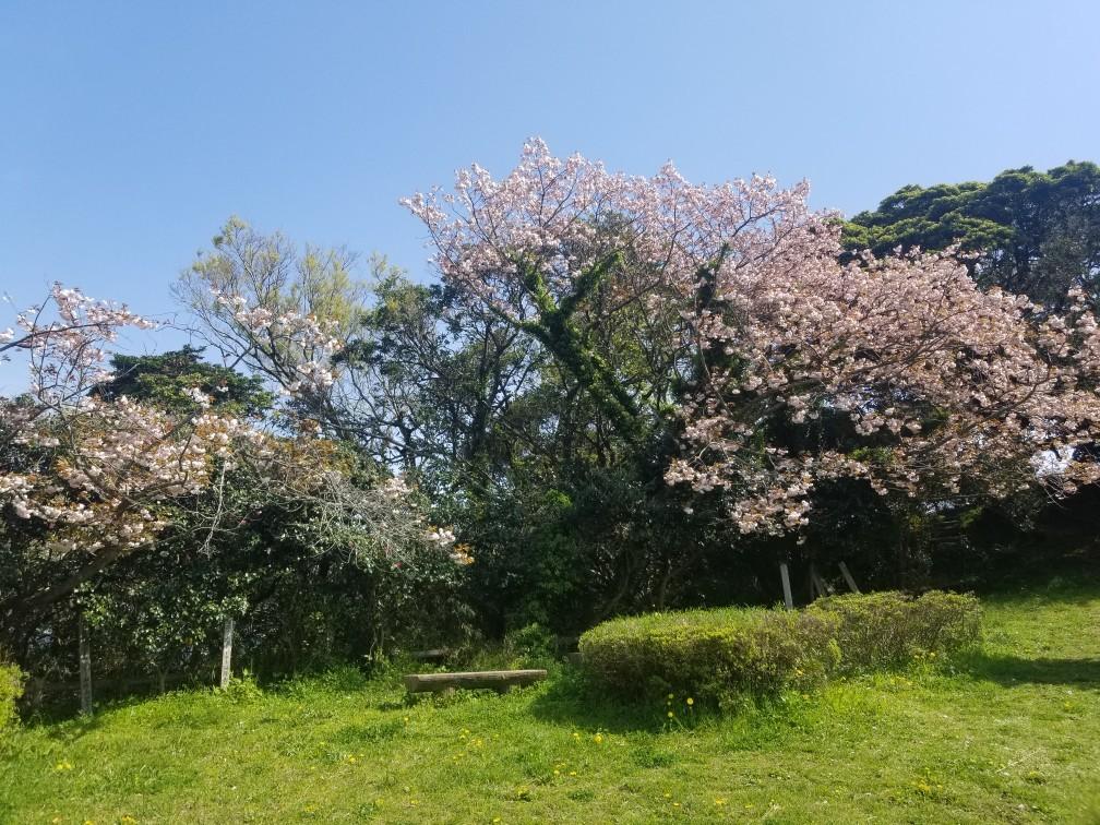 ♪2021年春★お花見模様(鎌倉~逗子~葉山)_d0162225_21223686.jpg