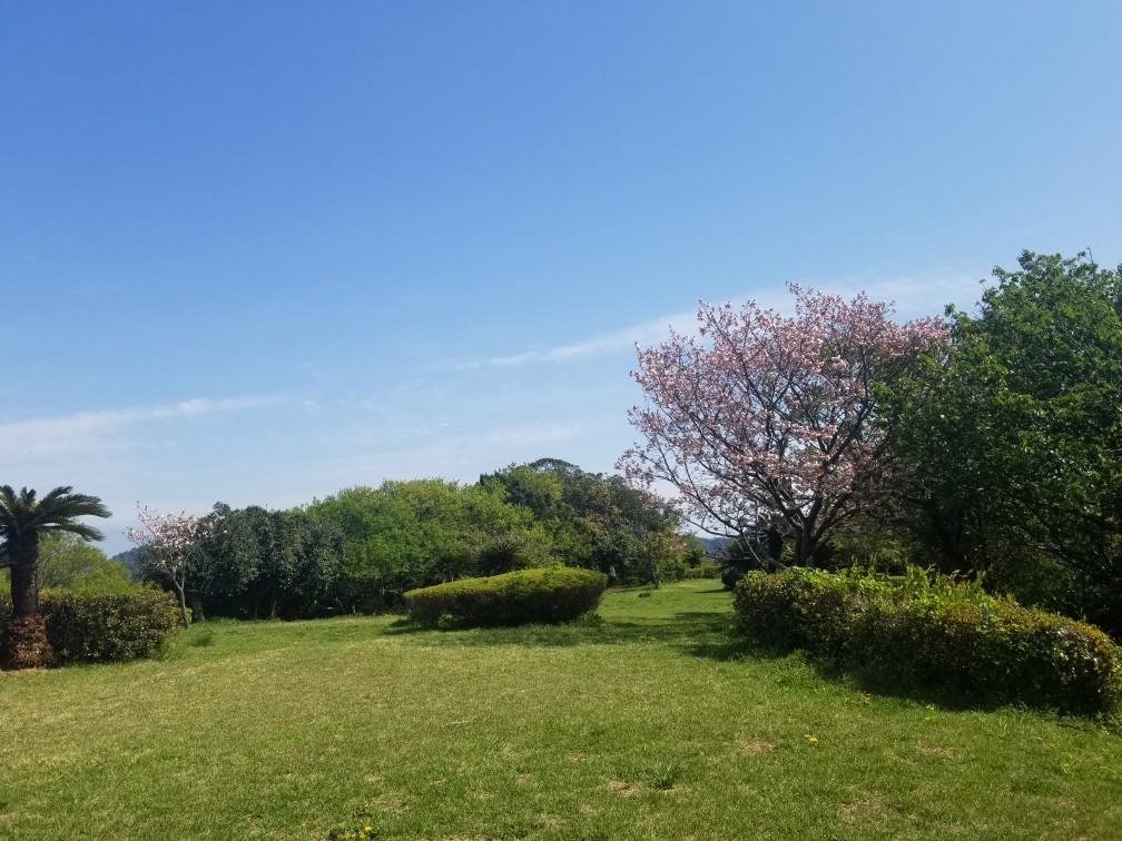 ♪2021年春★お花見模様(鎌倉~逗子~葉山)_d0162225_21224525.jpg