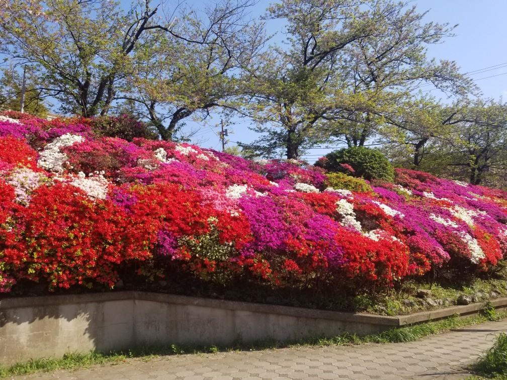 ♪2021年春★お花見模様(鎌倉~逗子~葉山)_d0162225_21225856.jpg