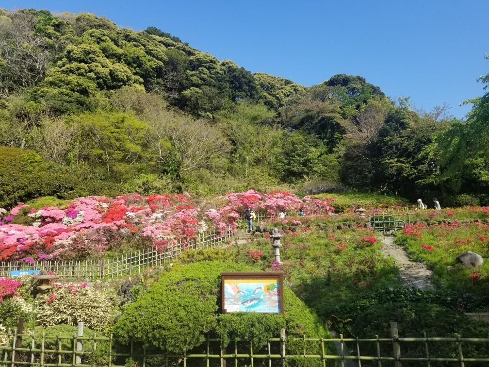 ♪2021年春★お花見模様(鎌倉~逗子~葉山)_d0162225_21230273.jpg