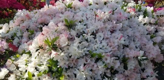 ♪2021年春★お花見模様(鎌倉~逗子~葉山)_d0162225_21231163.jpg