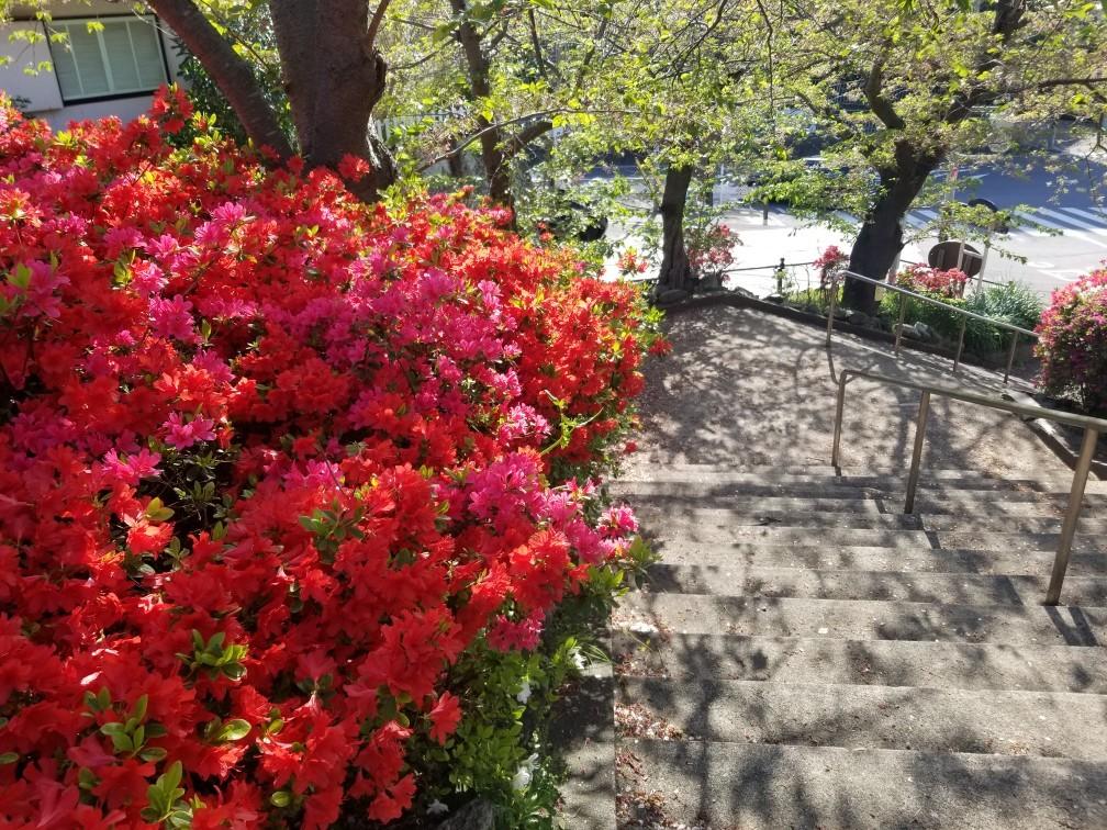 ♪2021年春★お花見模様(鎌倉~逗子~葉山)_d0162225_21232595.jpg