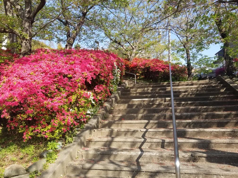 ♪2021年春★お花見模様(鎌倉~逗子~葉山)_d0162225_21232740.jpg