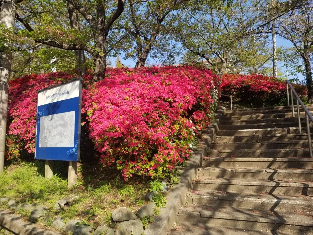 ♪2021年春★お花見模様(鎌倉~逗子~葉山)_d0162225_21232932.jpg