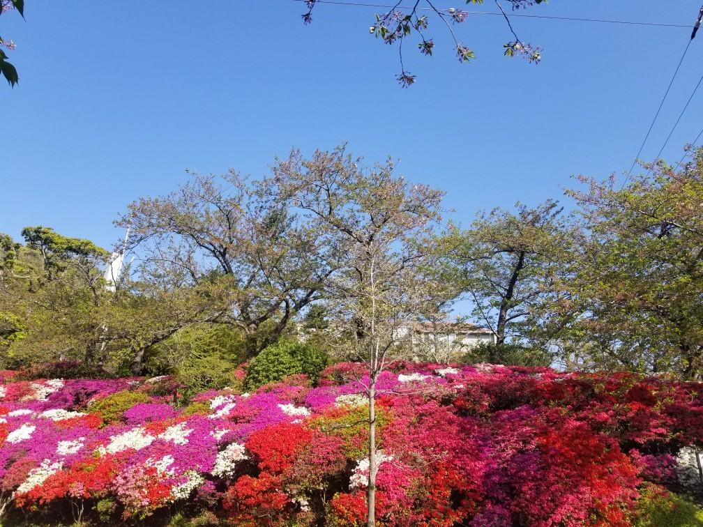♪2021年春★お花見模様(鎌倉~逗子~葉山)_d0162225_21233285.jpg