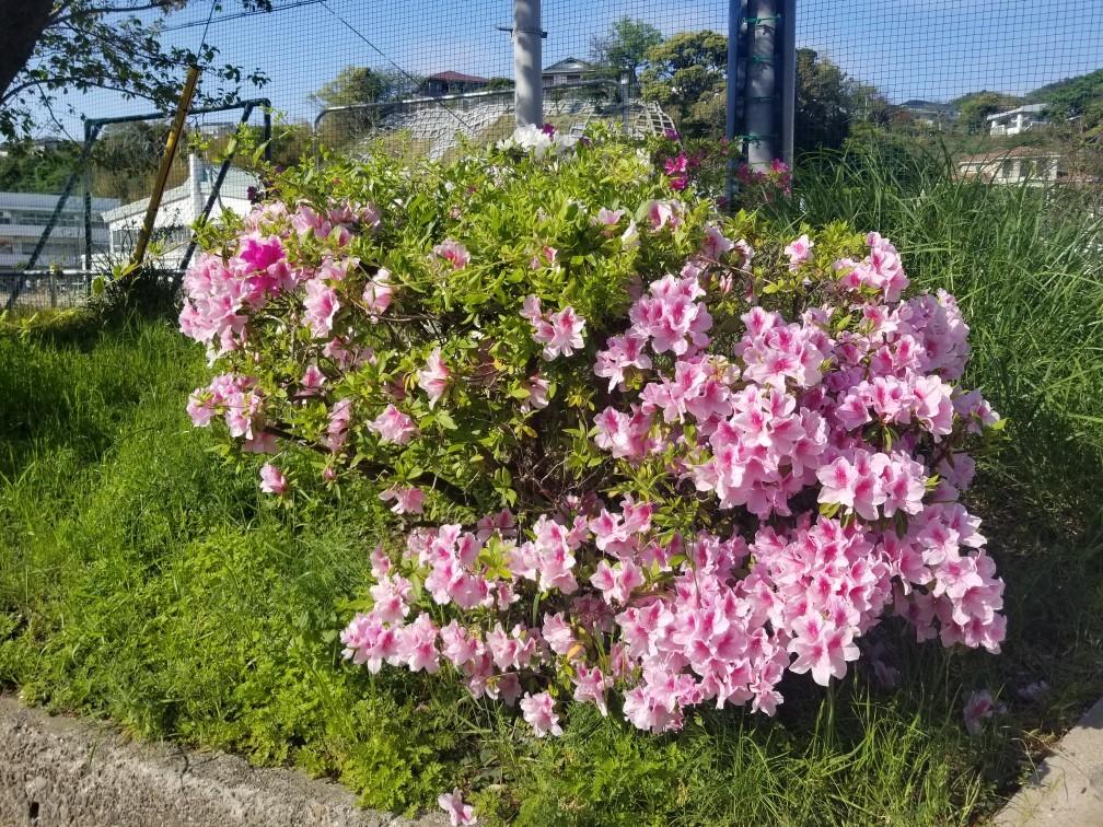 ♪2021年春★お花見模様(鎌倉~逗子~葉山)_d0162225_21233876.jpg