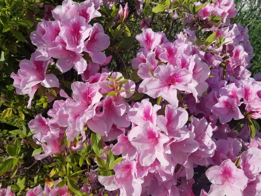 ♪2021年春★お花見模様(鎌倉~逗子~葉山)_d0162225_21234726.jpg
