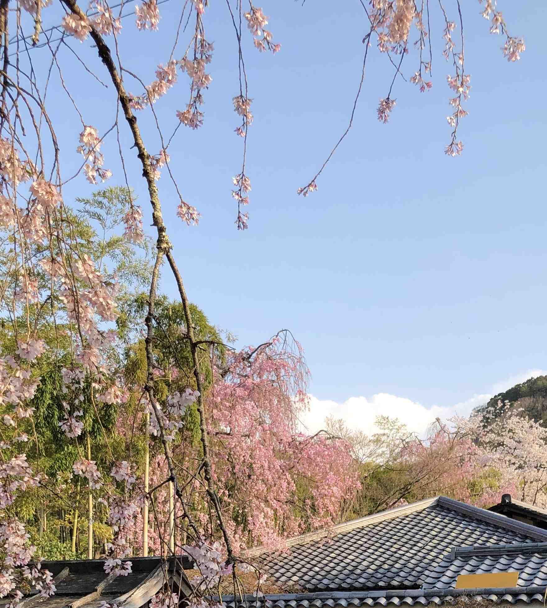桜から新緑へ_a0197730_09334789.jpg