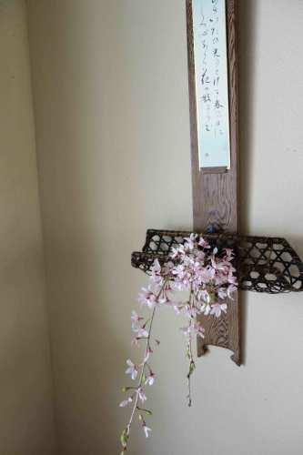 桜から新緑へ_a0197730_09395433.jpg