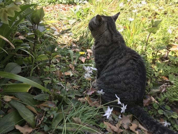 真昼の庭 うち猫そと猫_d0101846_16055164.jpeg