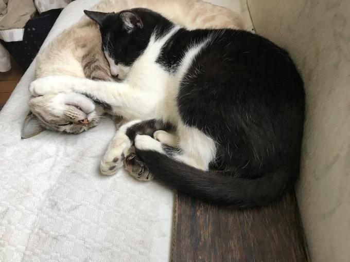 真昼の庭 うち猫そと猫_d0101846_16061236.jpeg