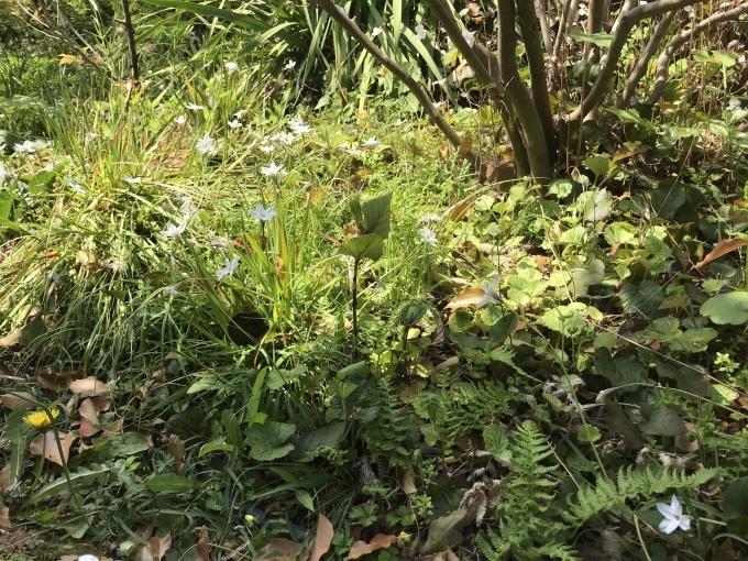 真昼の庭 うち猫そと猫_d0101846_16071716.jpeg