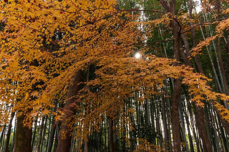 2020紅葉きらめく京都 竹の寺・地蔵院の秋_f0155048_23054318.jpg