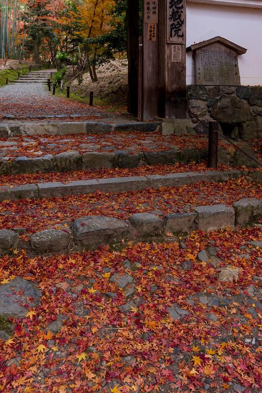 2020紅葉きらめく京都 竹の寺・地蔵院の秋_f0155048_23055264.jpg