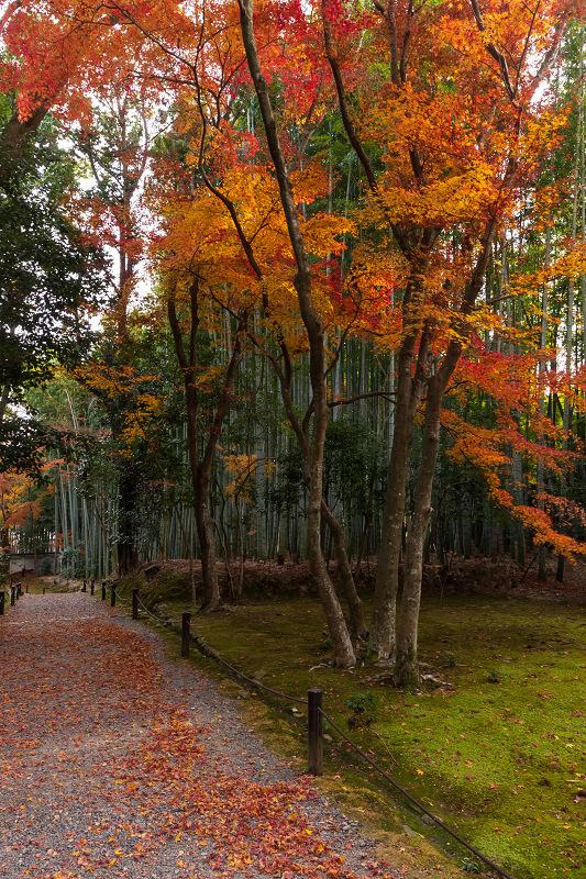 2020紅葉きらめく京都 竹の寺・地蔵院の秋_f0155048_23062568.jpg