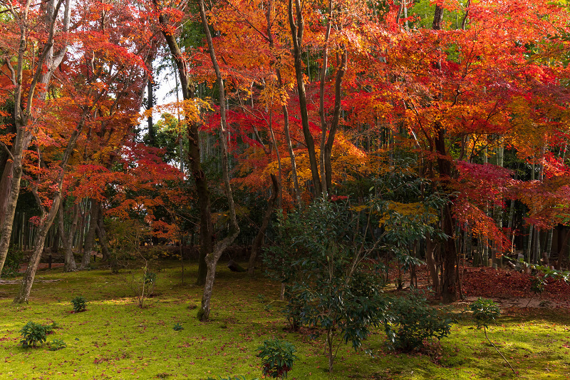 2020紅葉きらめく京都 竹の寺・地蔵院の秋_f0155048_23065745.jpg