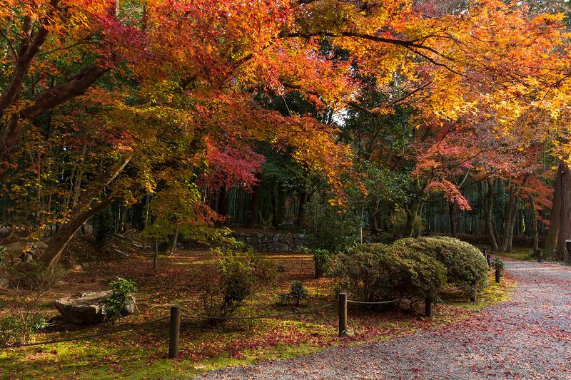 2020紅葉きらめく京都 竹の寺・地蔵院の秋_f0155048_23083593.jpg