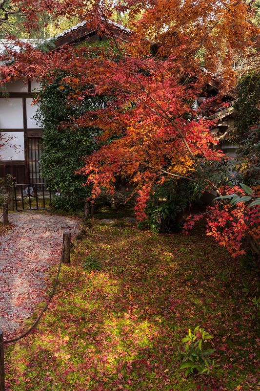 2020紅葉きらめく京都 竹の寺・地蔵院の秋_f0155048_23085568.jpg
