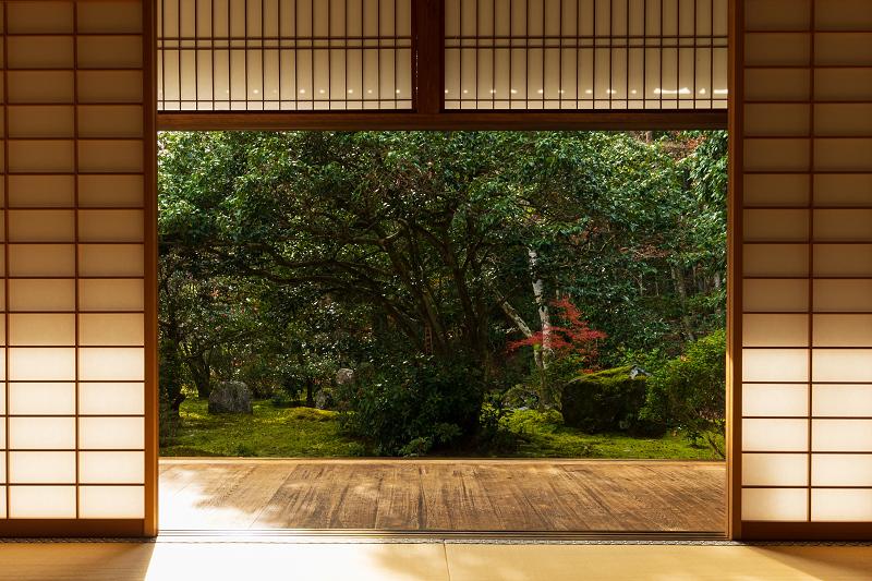 2020紅葉きらめく京都 竹の寺・地蔵院の秋_f0155048_23093512.jpg
