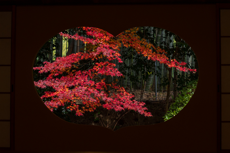 2020紅葉きらめく京都 竹の寺・地蔵院の秋_f0155048_23102134.jpg