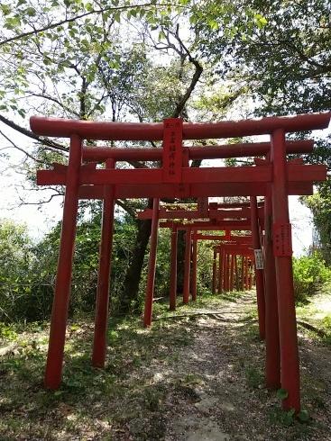 向島散策、立岩稲荷神社_a0220570_23072209.jpg