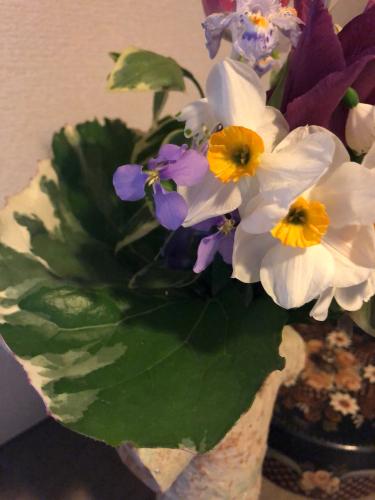この春のスギナ よもぎで下染め_e0295491_08254471.jpg