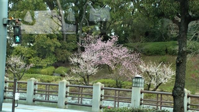 藤田八束の鉄道写真@愛媛県松山市JR四国の楽しい列車たち、松山市はかっはがあって歴史もあって面白い、そして素敵な歴史が探訪できる、食べ物がおいしい素敵な街_d0181492_18335830.jpg