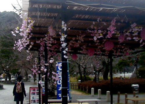 ●「増加する 造花桜や 贋盛り」_d0053294_13460166.jpg