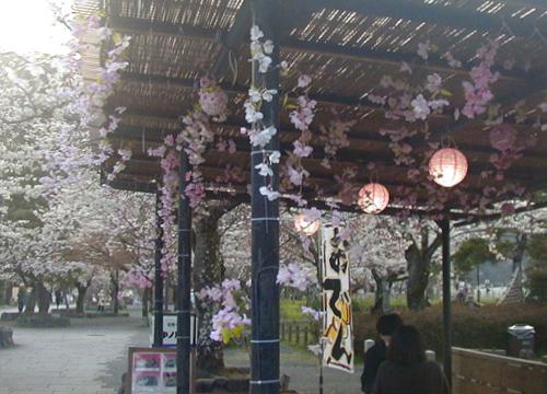 ●「増加する 造花桜や 贋盛り」_d0053294_13462268.jpg