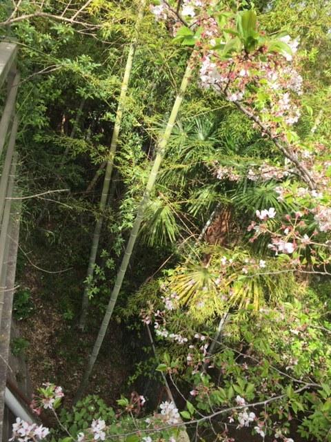 庭の初筍でちらし寿司_c0216197_20584215.jpg