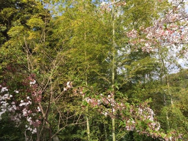 庭の初筍でちらし寿司_c0216197_20584372.jpg