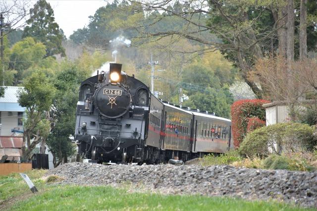 桜巡り2021 ~ 名残りの枝垂れ桜と蒸気機関車_b0356401_21565978.jpg