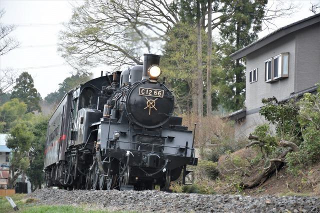 桜巡り2021 ~ 名残りの枝垂れ桜と蒸気機関車_b0356401_21570246.jpg