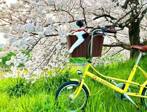 桜、さくら、サクラ。_d0077603_10055645.jpg