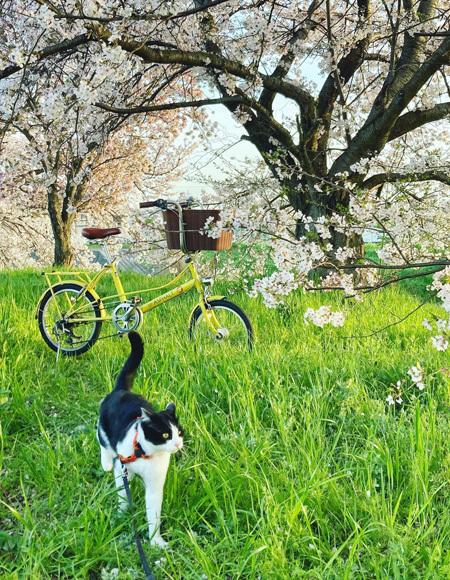 桜、さくら、サクラ。_d0077603_10060233.jpg