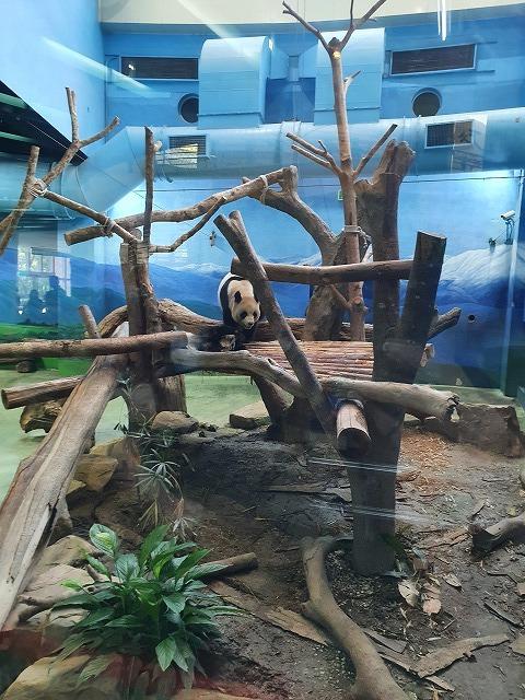 家族連れでも、おひとりさまでも楽しめる台北市立動物園♪_b0182708_20431906.jpg