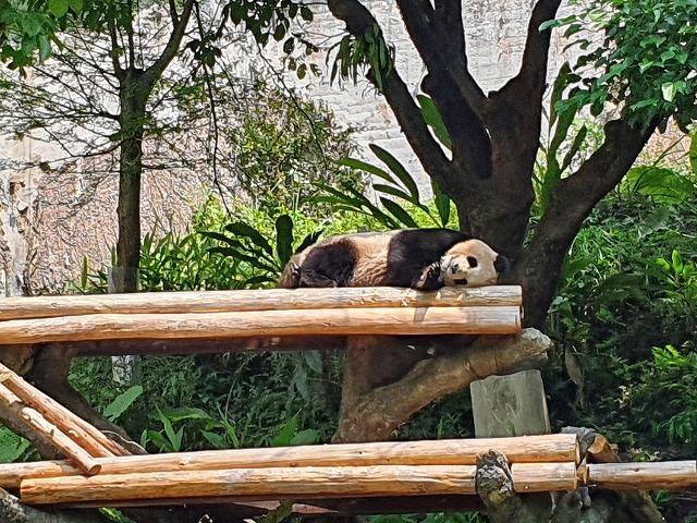 家族連れでも、おひとりさまでも楽しめる台北市立動物園♪_b0182708_20431961.jpg