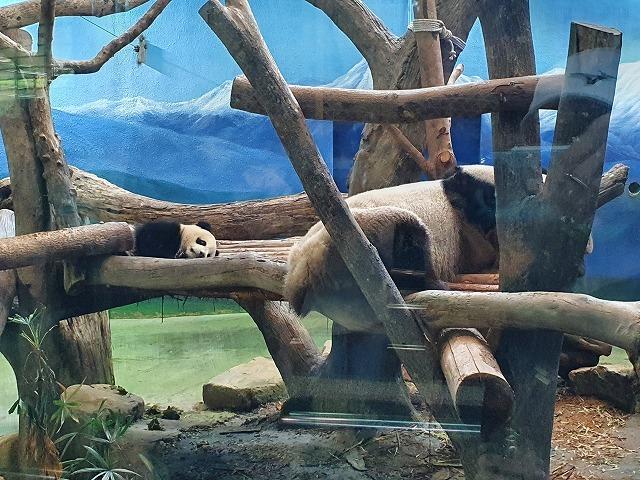家族連れでも、おひとりさまでも楽しめる台北市立動物園♪_b0182708_20432565.jpg